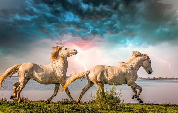 Picture the storm, clouds, river, zipper, horses, horse, a couple