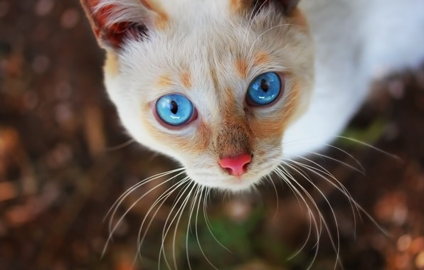 Picture eyes, cat, background, face