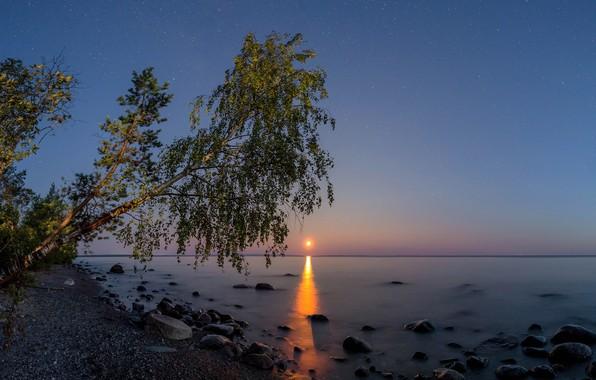 Picture the sky, landscape, night, nature, lake, stones, tree, the moon, shore, stars, Karelia, Lake Onega, …
