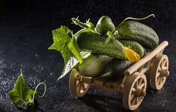 Picture leaves, drops, the dark background, fruit, wagon, truck, still life, flowering, wooden, toy, fresh, cucumbers, …