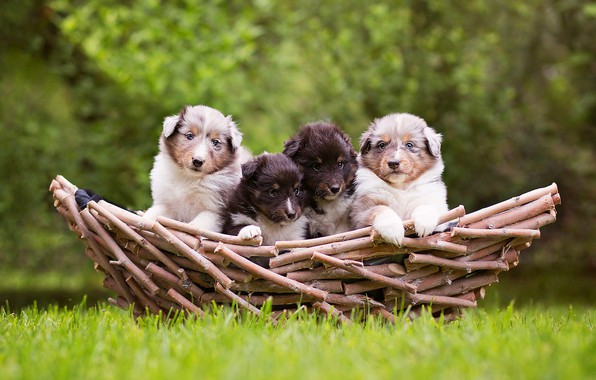 Picture greens, dogs, grass, nature, background, basket, glade, puppies, four, kids, company, faces, kids, wood, Quartet, …