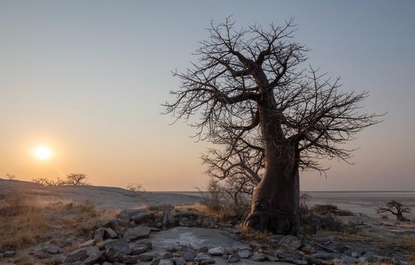 Picture Sunset, botswana, Kubu Island, boabab