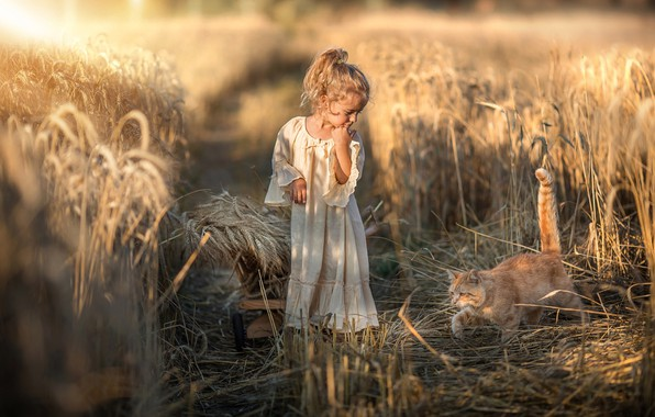 Picture field, autumn, cat, summer, cat, look, light, nature, childhood, face, pose, style, retro, mood, white, …