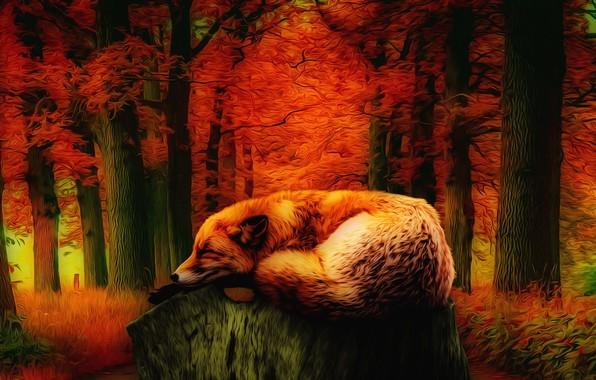 Picture nature, fatigue, beauty, tale, Fox, autumn forest, фЭнтези арт, красная листва деревьев, лис спящий на …
