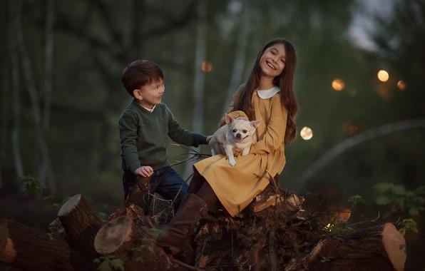Picture forest, joy, nature, children, animal, dog, boy, girl, stumps, dog, Julia Kubar
