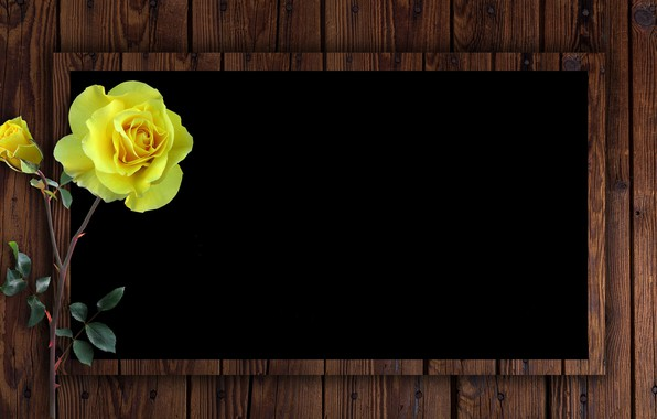 Picture rose, postcard, template, blank