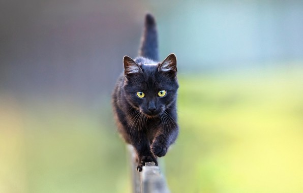 Picture blurred background, on the fence, black cat