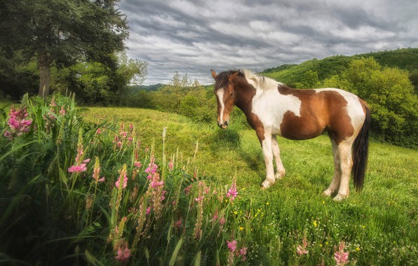 Picture greens, field, summer, clouds, trees, flowers, nature, mood, horse, hills, glade, horse, slope, pasture, meadow, …