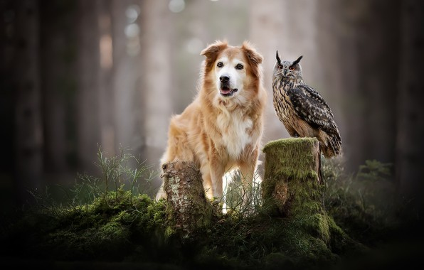 Picture forest, nature, bird, dog