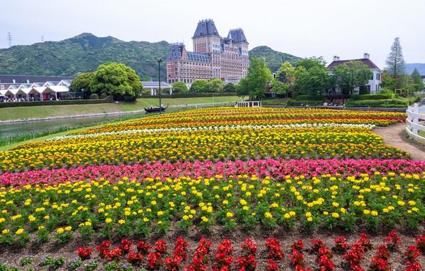 Picture flowers, Park, Japan, Japan, Sasebo, Huis Ten Bosch Park, Hayes Park Huis ten Bosch, Sasebo