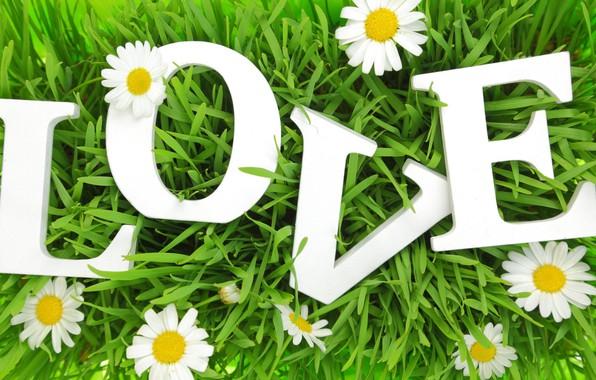 Picture grass, love, letters, chamomile, love, grass, letters, chamomile, love