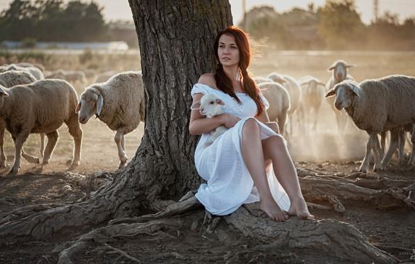 Picture girl, sheep, the herd, lamb, Goran Dobožanov
