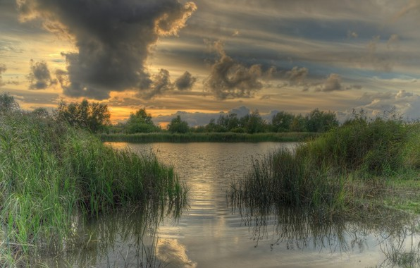 Picture grass, river, overcast, the evening