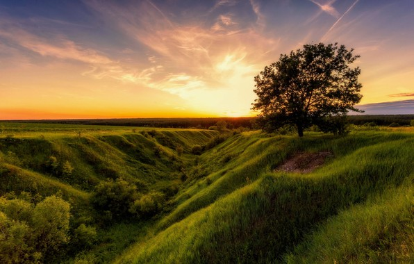 Picture field, summer, the sky, nature, tree, dawn, Alexey Malygin