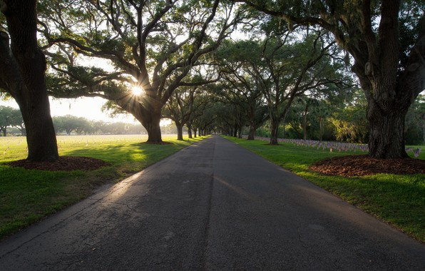 Picture United States, Florida, St. Petersburg, Hallowed Drive