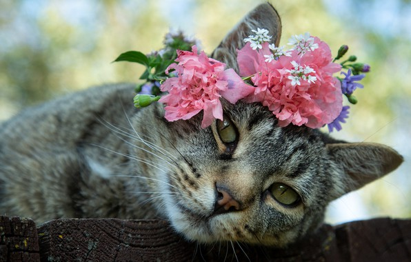 Picture cat, look, flowers, muzzle, wreath, cat