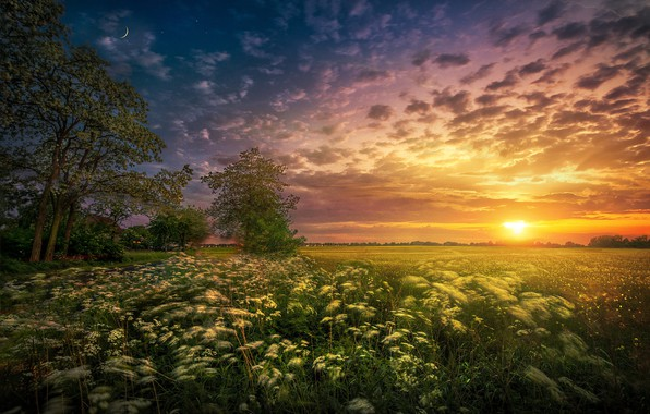 Picture field, the sun, trees, landscape, sunset, nature, a month, grass