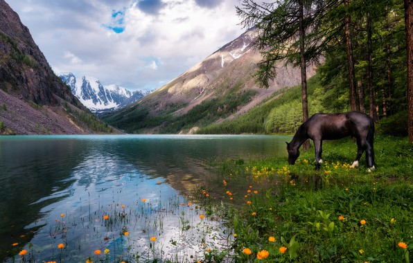 Picture forest, the sky, clouds, landscape, flowers, mountains, nature, lake, reflection, horse, horse, pine, Russia, drink, …
