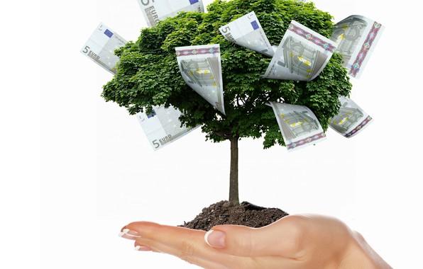 Picture creative, TREE, MONEY