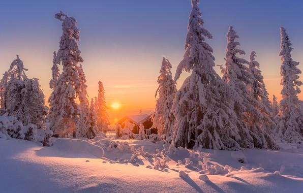 Picture winter, the sky, snow, sunset, tree, Jоrn Allan