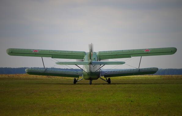 Picture The plane, Antonov, An-2, Maize, An-2, Annushka