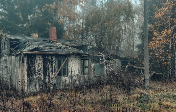 Picture fog, house, naturalism