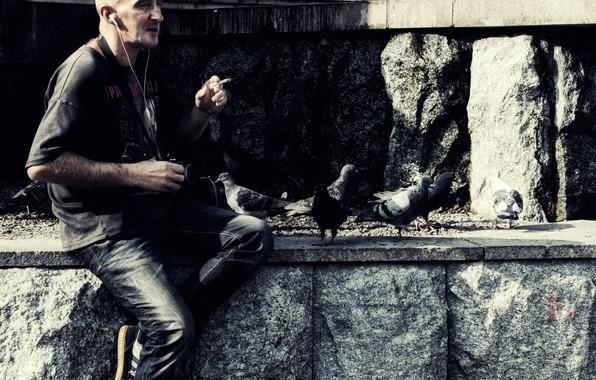Picture birds, Stone, pigeons, Photographer