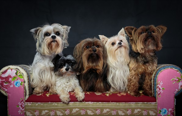 Picture beautiful, dogs, five, Animals
