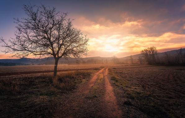 Picture road, field, fog, tree, Spain, The Stain