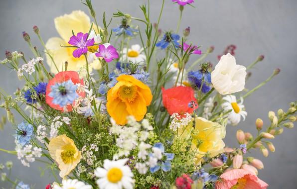 Picture Mac, bouquet, Daisy