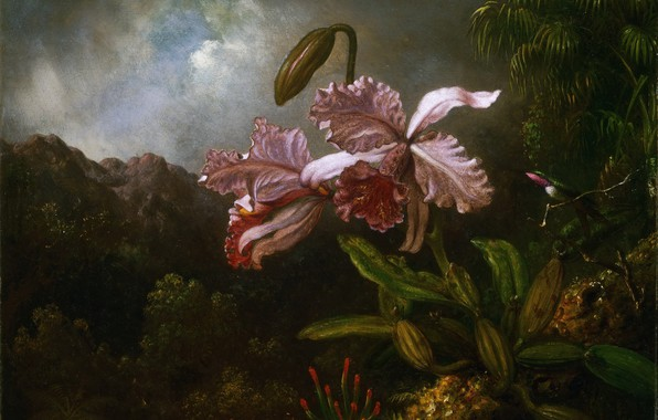 Picture picture, painting, Martin Johnson Head, Martin Johnson Heade, Orchids on a background of mountains