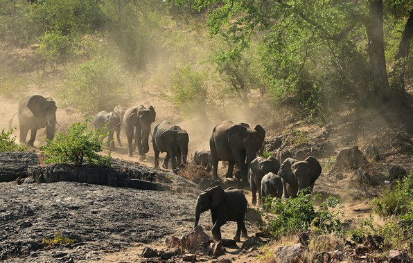 Picture dust, elephants, the herd