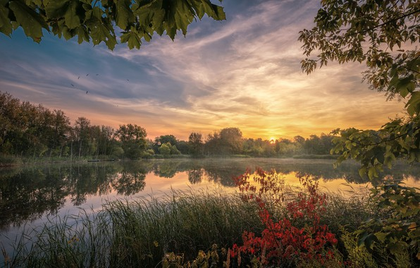 Picture the sky, trees, sunset, branches, lake, pond, reflection