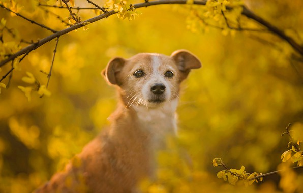 Picture look, face, branches, background, dog