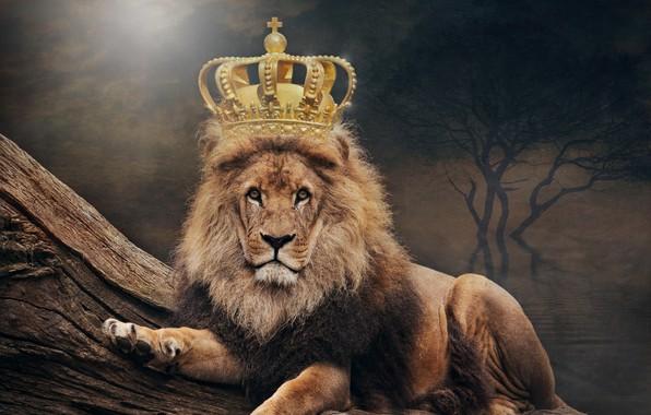 Picture Leo, crown, art, king, animal world