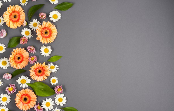 Photo wallpaper flowers, background, chamomile, colorful, summer, gerbera, flowers