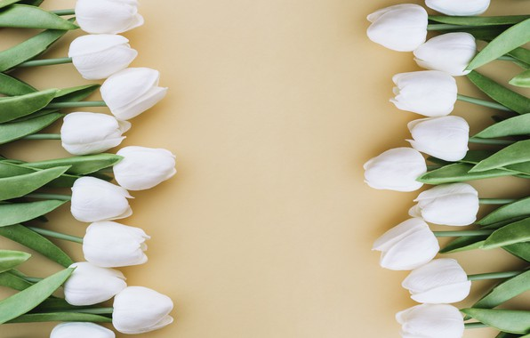 Picture flowers, background, bouquet, tulips