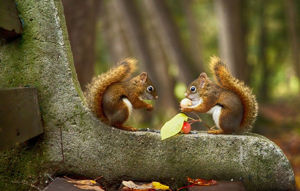 Picture blurred background, on the bench, two squirrels