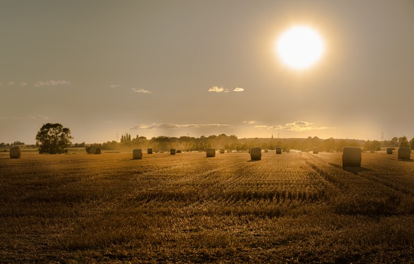 Picture field, summer, sunset, hay