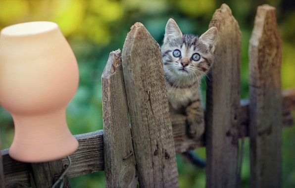 Picture look, the fence, baby, muzzle, kitty, pot