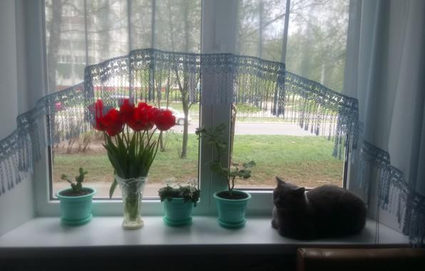 Picture window, pots, Cats love Windows