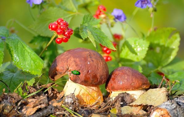 Picture autumn, leaves, flowers, nature, berries, mushrooms, beetle, Vlad Vladilenoff