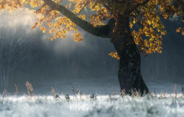Wallpaper frost, autumn, tree, autumn, tree, frost, SUNTARARAK SAOWANEE