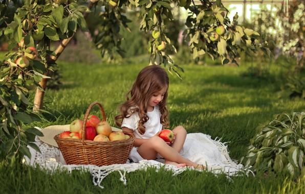 Picture basket, apples, harvest, girl