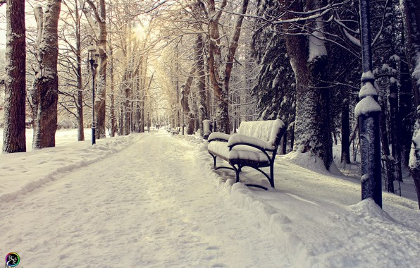 Picture winter, the sun, snow, bench, Park, Pavel Nazarenko