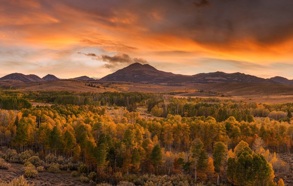 Picture autumn, forest, landscape, sunset, mountains, nature, beauty, the evening, panorama