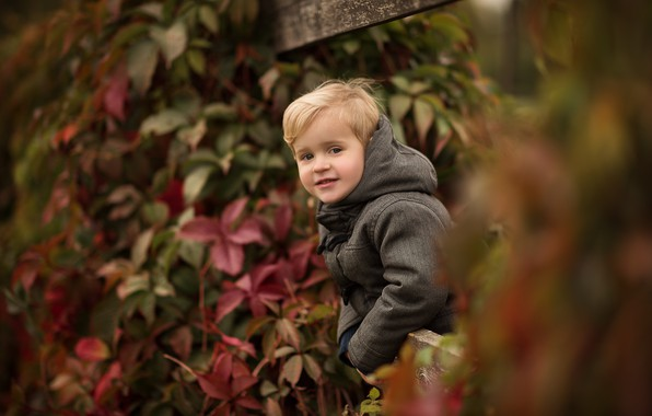 Picture autumn, leaves, nature, Board, the fence, boy, jacket, hood, child, ivy, Julia Kubar