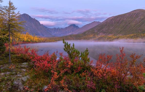 Picture autumn, clouds, trees, landscape, mountains, nature, fog, dawn, shore, morning, the bushes, Vladimir Ryabkov, Kolyma, …