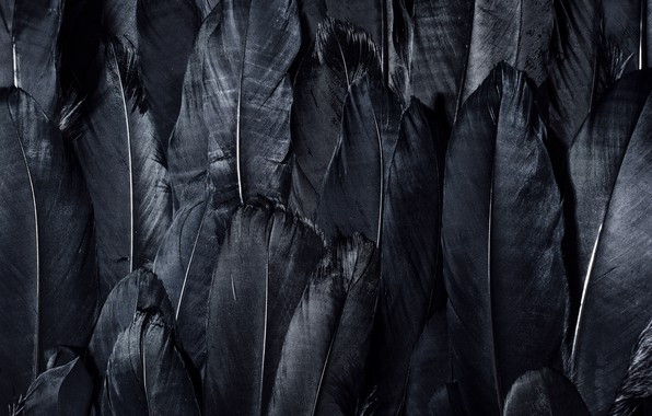 Picture dark, black, feathers, textures, black wallpaper, 4k ultra hd background, black feathers