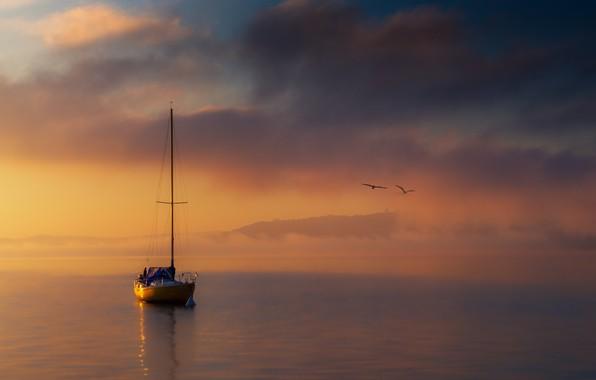 Picture sea, boat, seagulls, sea, boat, seagulls, Cristiano Giani